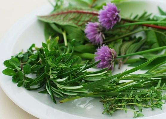 Ne všechny bylinky jsou vhodné pro všechny