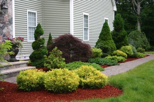 1000 ideas about foundation planting on pinterest shrubs evergreen shrubs and evergreen. Black Bedroom Furniture Sets. Home Design Ideas