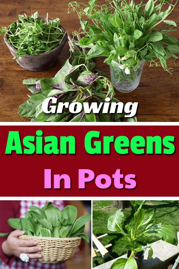Asian plant containers