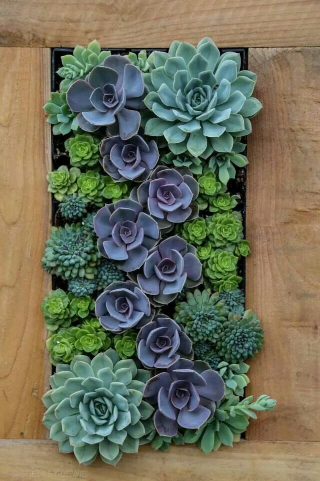 Living succulent wall More