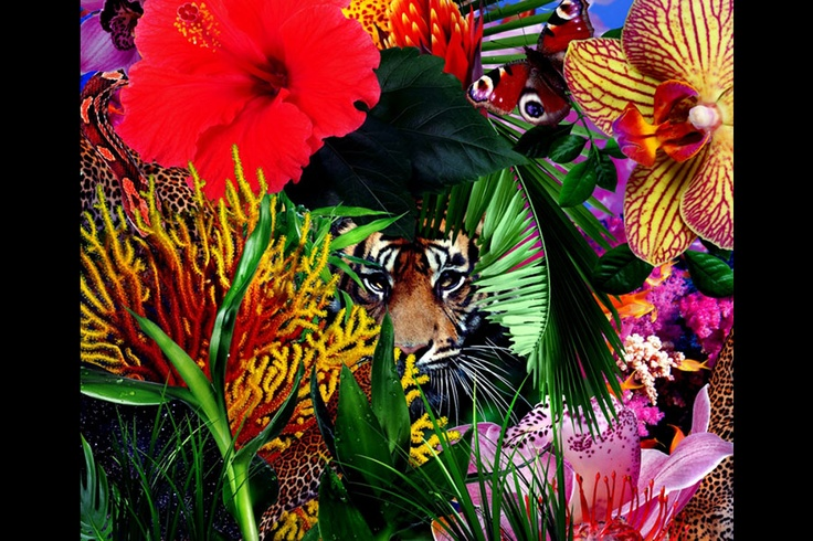 """An interview with Mat Maitland, director of our Resort 2013 """"Electric Jungle"""" video"""