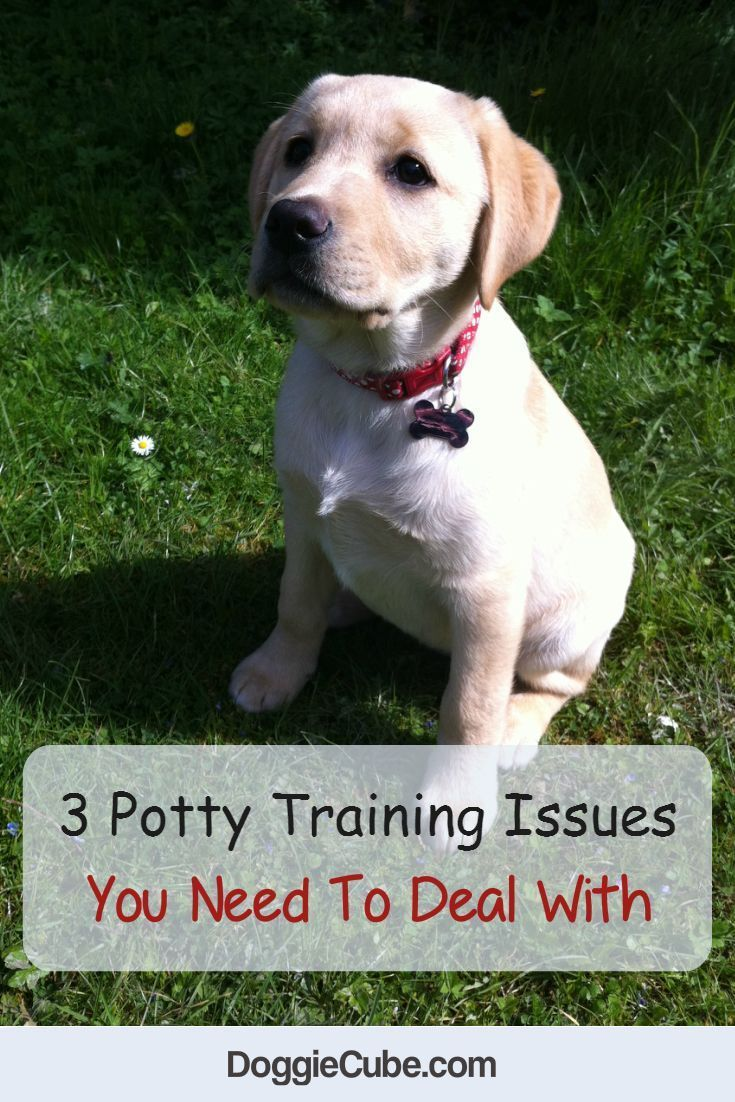 3 Potty Training Issues You Need To Deal With Training Your