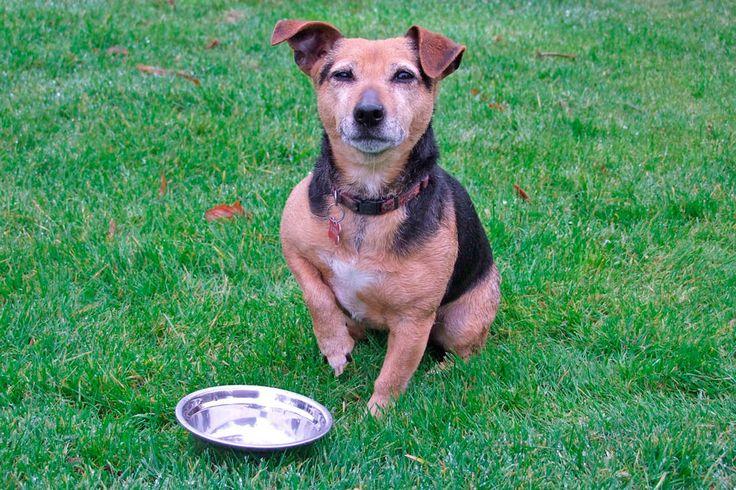 ***¿Cómo Elegir un Comedero para Perros?*** Olvídate de esos contenedores sucios y reutilizados, y aprende a reconocer lo más seguro para tu mascota....SIGUE LEYENDO EN..... http://comohacerpara.com/elegir-un-comedero-para-perros_9470h.html