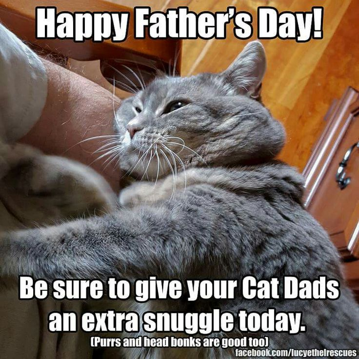 29 best catsmotherfather day images on pinterest kittens kitty happy fathers day fathers day humor funny kitty cats animals happy valentines day dad parents day tired funny sciox Gallery