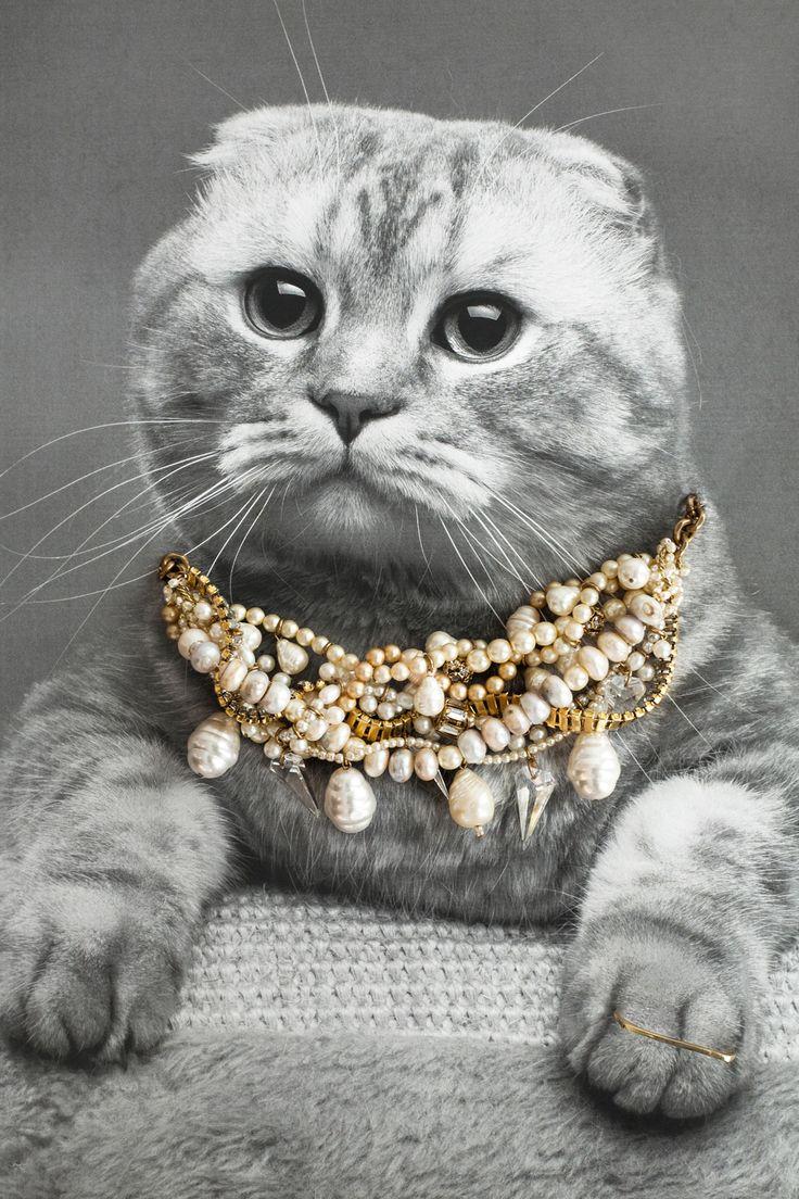 картинки котики с украшениями