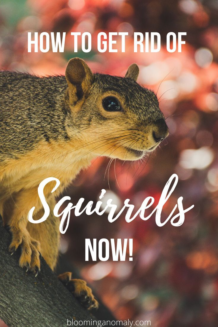 How To Keep Squirrels Out Of Your Garden In 2020 Get Rid Of