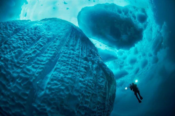 Le più belle foto subacquee del 2016