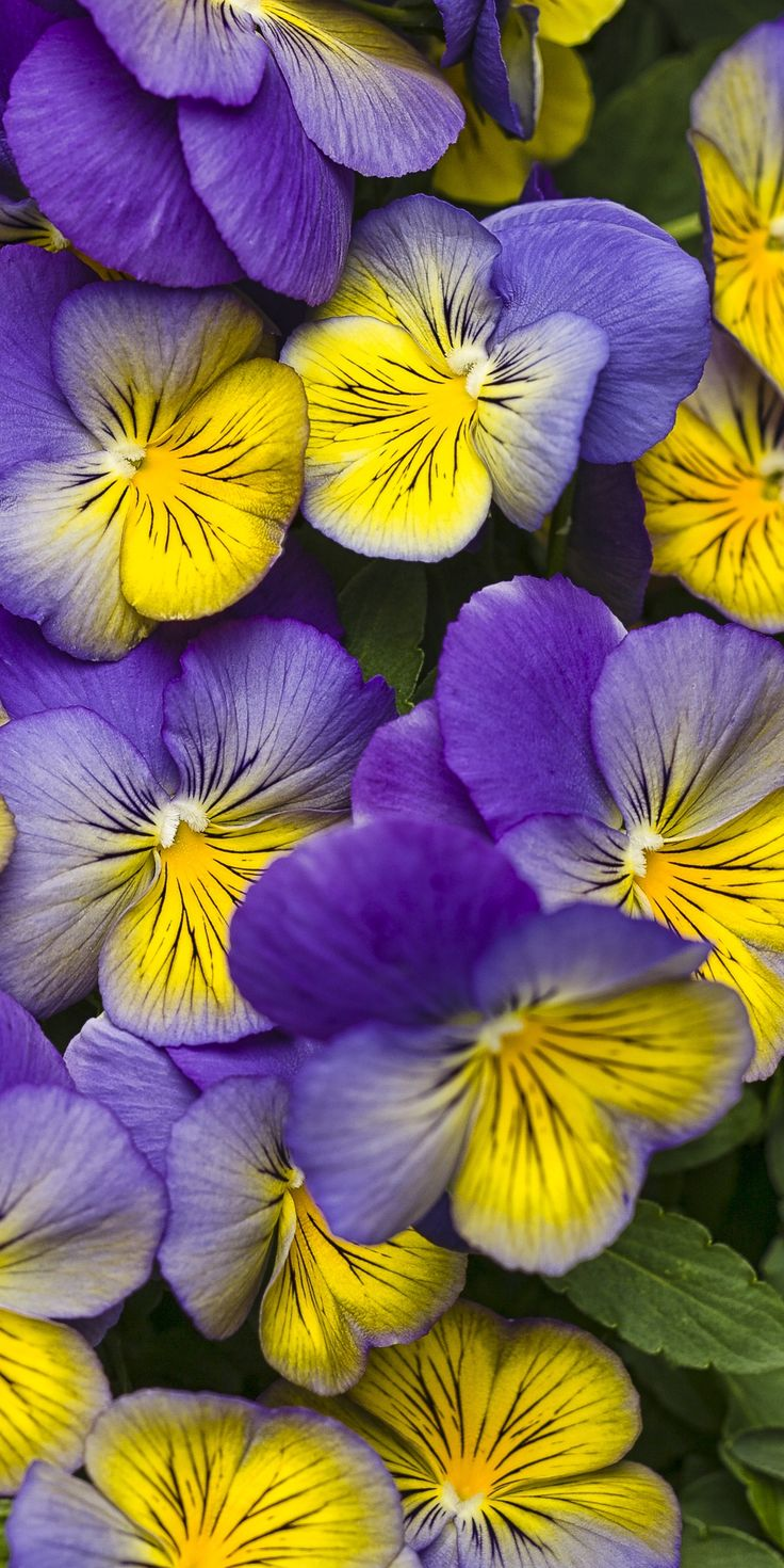 The 50 Best Plants For Spring Color Images On Pinterest