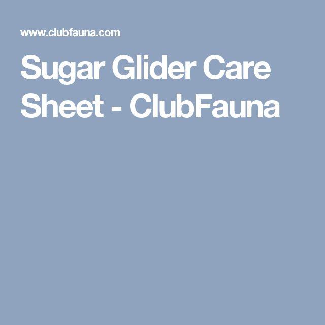 Sugar Glider Care Sheet - ClubFauna