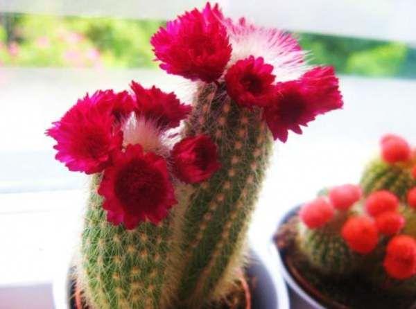 binnenspelletjes cactus en bloem