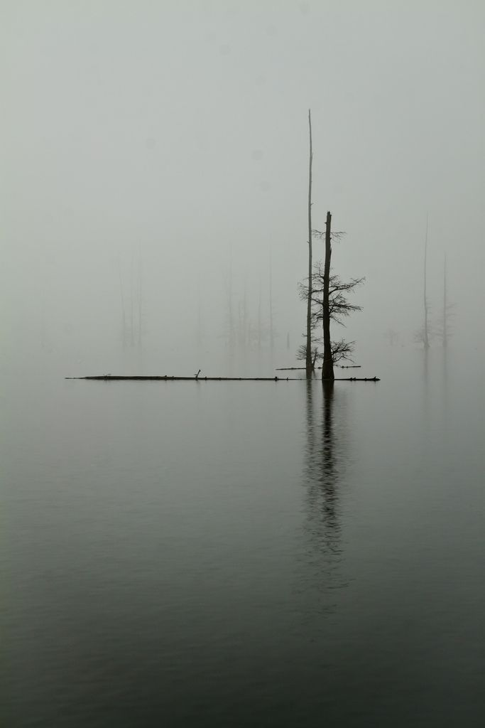 compositoin: simplicity: i love how there is nothing going on in this picture and it is basically just a tree...it looks very mysterious
