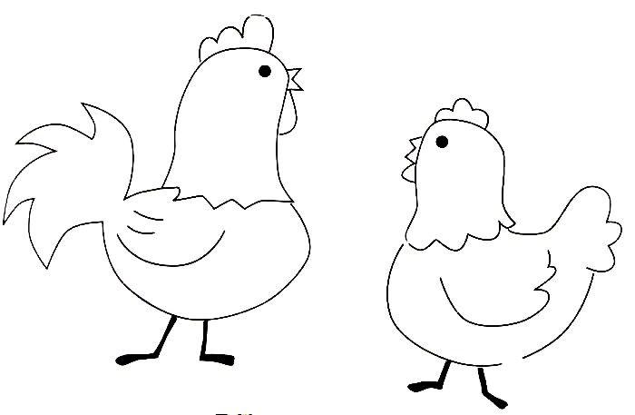 Imagens de galinhas e pintainhos