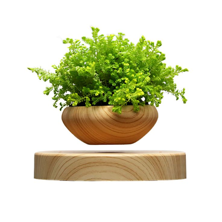 Air Bonsai - levitating plant pot.