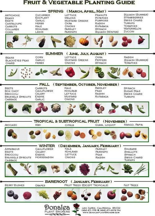 When to plant vegetables.Spring (Sept-Nov), Summer (Dec-Feb), Fall (Mar-May), Winter (June-Aug).