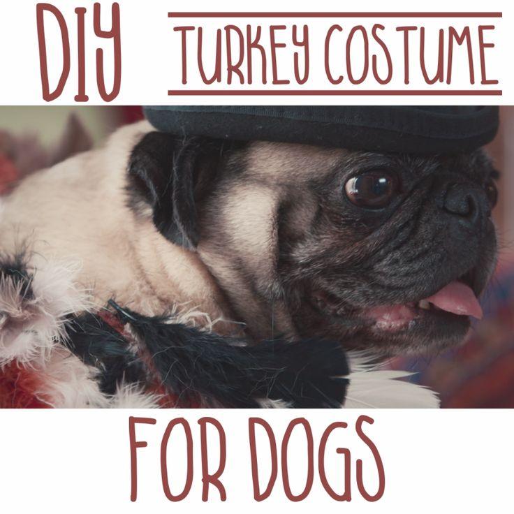 492 best easy halloween diy ideas images on pinterest halloween diy turkey costume for dogs solutioingenieria Choice Image