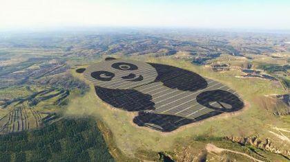 Kínában felépült az első cuki napelem erőmű. Egy óriáspanda alakját formázzák a monokristályos (fekete) és vékonyréteg (világos) napelem panelek.