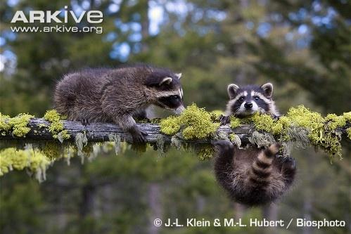 Happy National Wildlife Week!