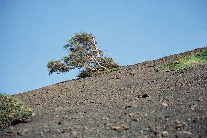 ETNA: terra del vulcano