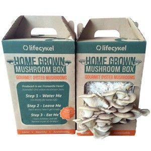 This DIY mushroom grow kit from Life Cykle utilises coffee grounds to cultivate your own gourmet Oyster mushrooms. The original super food, Oyster mushrooms are packed with protein, calcium, magnesium, selenium and a variety of vitamins. Expect your first mushrooms in 10-16 days. Just spray, eat, repeat! More stock due in one week. Please put your email to be alerted.