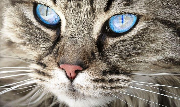 Ученые составили ТОП-5 самых умных животных на Земле http://kleinburd.ru/news/uchenye-sostavili-top-5-samyx-umnyx-zhivotnyx-na-zemle/