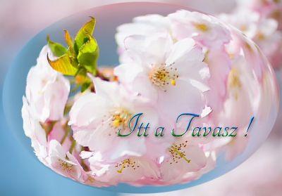 Örömhír ! – Ma beköszöntött a TAVASZ ! 2016 Tavaszinapéjegyenlőség:  2016/03/204:31:54 http://megoldaskapu.hu/tavasz/tavaszi-tisztitokurak