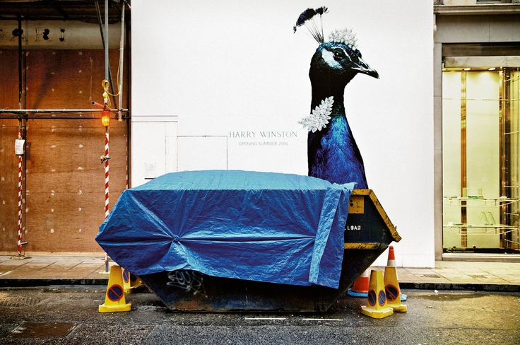 Matt Stuart - 'The colour of the peacock and the tarpaulin cover match perfectly, the funny contrast between the objects, with the peacock being seen as a regal, proud and colourful creature combined with an object that represents junk, trash and rejection.'