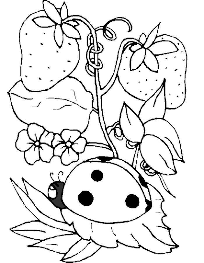 Ladybug And Tree Strawberry Coloring Pages | Ladybug ...