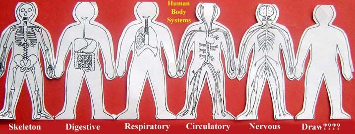 paper doll human body system Cycle 3 (downloadable)