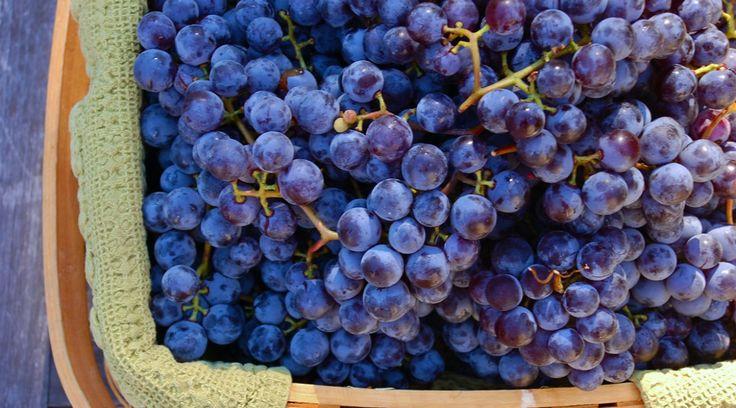 ПОЛЕЗНЫЕ СВОЙСТВА ВИНОГРАДА http://pyhtaru.blogspot.com/2017/07/blog-post_67.html  Как виноград помочь здоровью рад!  Виноград – вкуснейшее лакомство, которого по всему миру насчитывается более 8000 сортов. Богатый своим химическим составом, виноград имеет массу полезных свойств, которые необходимы нашему организму:  Читайте еще: ================================ НАСТОЙ ИЗ КОРОК ГРАНАТА http://pyhtaru.blogspot.ru/2017/07/blog-post_38.html ================================  - антиоксиданты…