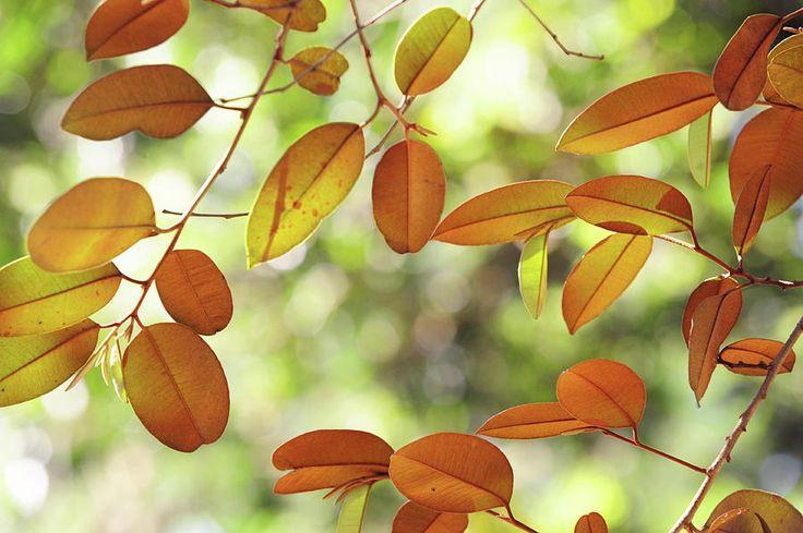 Sunny Foliage by Jenny Rainbow