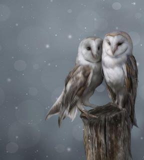 Owl painting by artist Jody Bergsma!