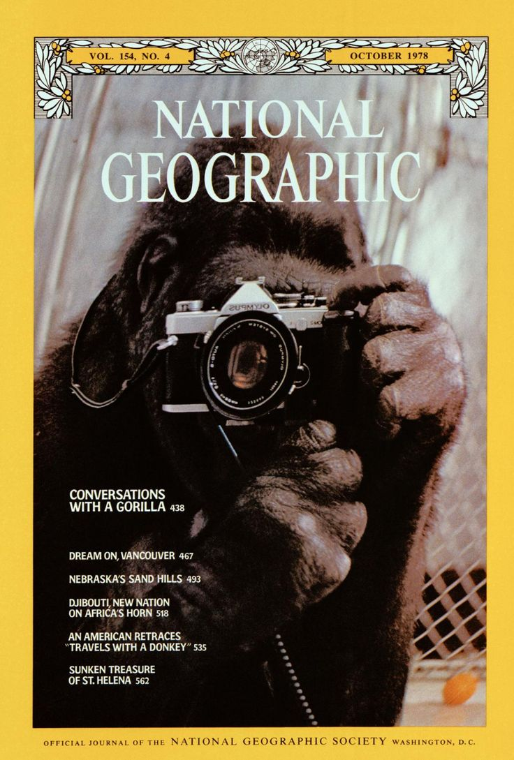 Conversations With A Gorilla In 2020 National Geographic Cover National Geographic Magazine National Geographic