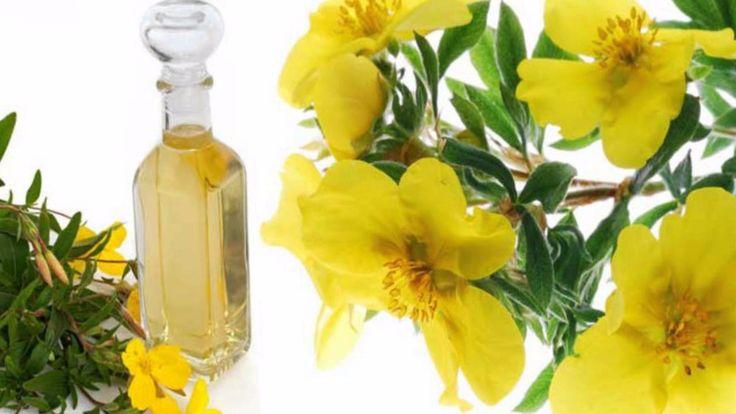 La onagra es una planta de tallo recto, con muchas hojas, pelos y puntiagudas, que posee flores de color amarillas con 4 pétalos, las cuales se encuentran