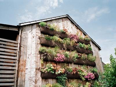 I want to make these for my front yard wall!!! Pockets!!!: Gardens Ideas, Backyard Ideas, Gardens Decor, Gardens Tools, Modern Gardens Design, Country Living, Vertical Gardens, Plants Wall, Wall Gardens