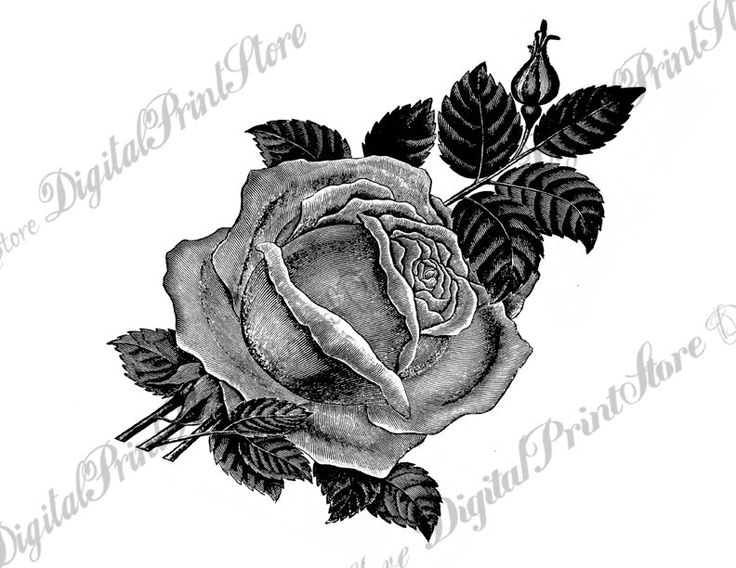 Rose Chalkboard Rose 001, Clip Art, Embroidery, Sewing Pattern, Commercial Use by DigitalPrintStore on Etsy