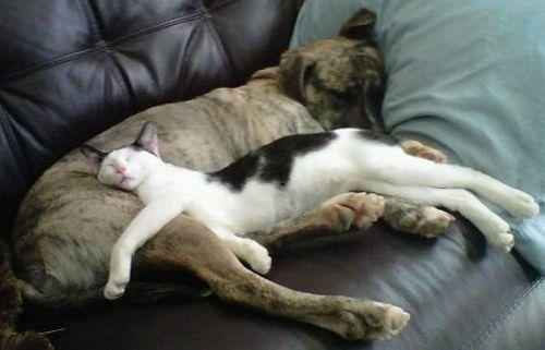 As 25 posições preferidas por gatos na hora de dormir