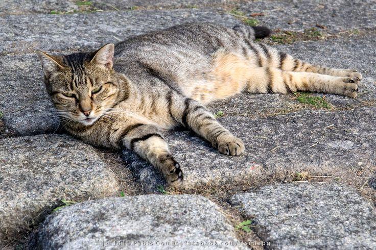 [2014 - Porto / Oporto - Portugal] #fotografia #fotografias #photography #foto #fotos #photo #photos #local #locais #locals #animal #animais #animales #animals #gato #cat #europa #europe