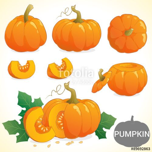 Vector: Set of pumpkin in various styles vector format