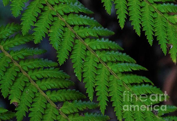 #fern #nature #photography
