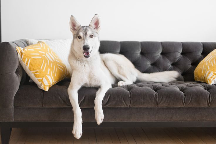 If your pet has couch privileges (or thinks he does), your furniture can start to smell like the dog park. Sprinkle baking soda on your cushions to freshen them, let it sit for 15 minutes, and vacuum it up. We also like Febreze Pet Odor Eliminator to quickly keep upholstery smelling nice in between deeper cleanings.   - CountryLiving.com