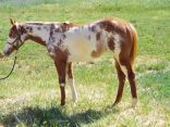 EquineNow - horse classifieds