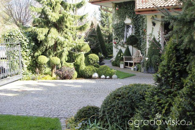 Ogród nie tylko bukszpanowy - część III - strona 511 - Forum ogrodnicze - Ogrodowisko