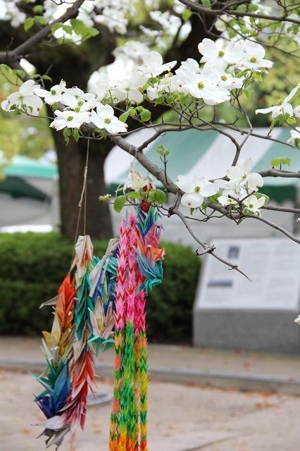 Hiroshima Peace Memorial Park  満開のハナミズキと千羽鶴
