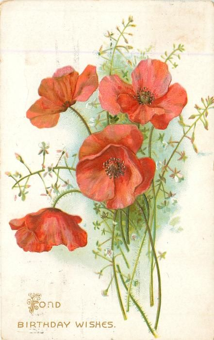 FOND BIRTHDAY WISHES red poppies
