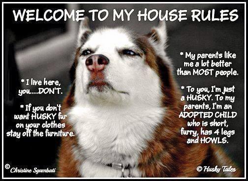 So, yeah!! #Husky House Rules