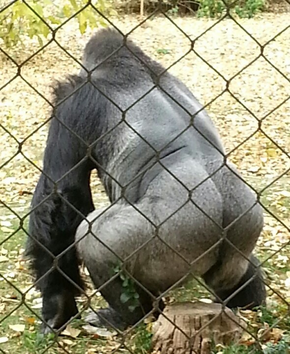 17 Best Images About Denver Zoo On Pinterest