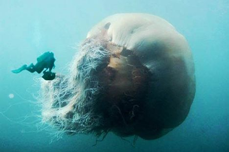 Monster of the deep! Jellyfish