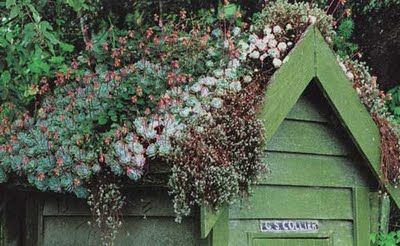 shed with beautiful living roof