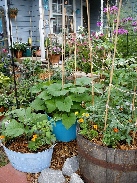 Vegetable Container Garden  Tomatoes, cukes, squash, eggplant, strawberries.
