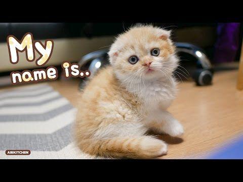 아기 고양이 이름 결정했어요♥ - Ari Kitchen(아리키친) - YouTube